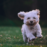 CBD Oil Anxiety for Pets