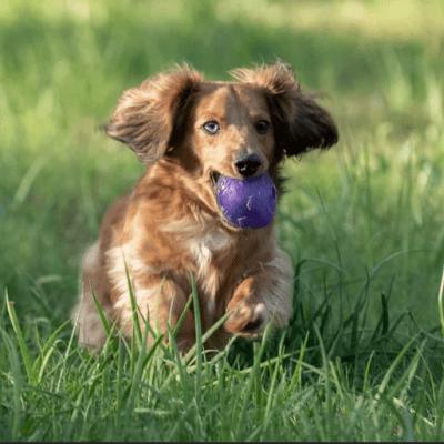 Pet Shampoo Bar Happy Dog